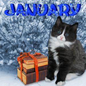 January kitten