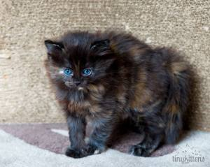 Visit Tinykittens.com for more information about Hula and other rescued kittens.